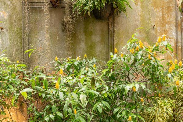 jardim-da-casa-13