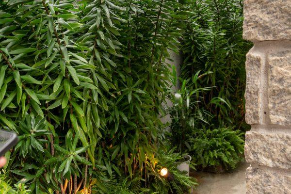 jardim-da-casa-29